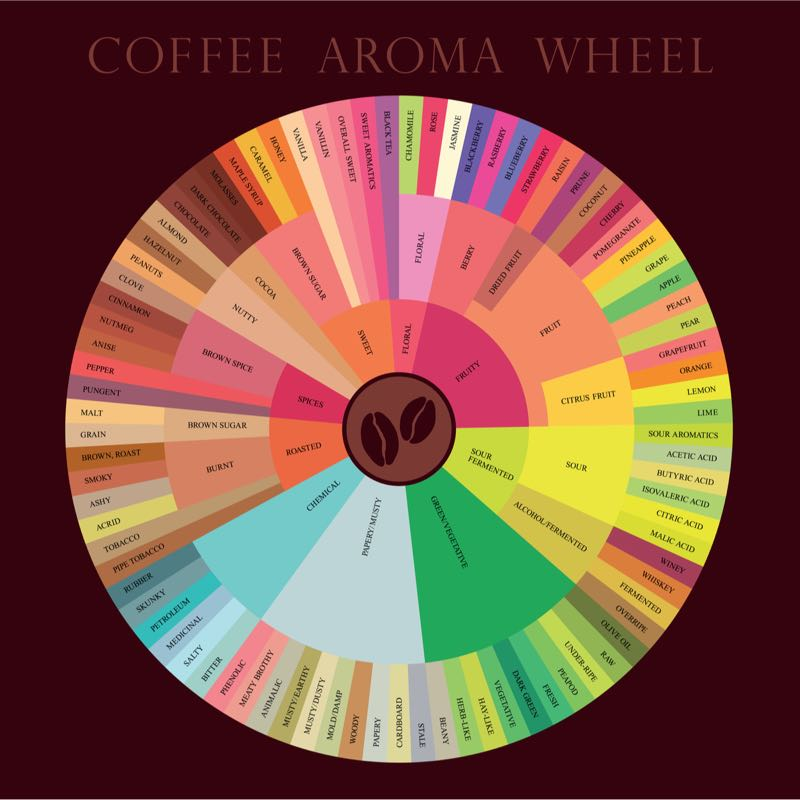 coffee flavour wheel